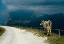 Il Monte Baldo - Animali sul Baldo